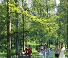 建设森林公园   实现生态与经济共赢