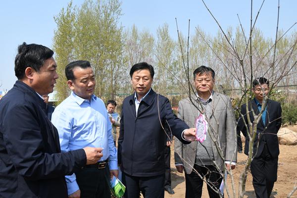 濮陽市春季造林綠化現場觀摩點評會在南樂召...